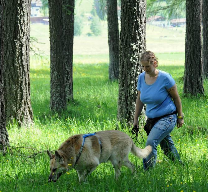 fährtensuche mit hund