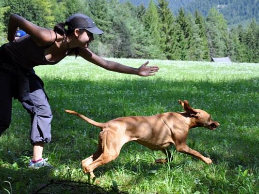 flächensuche mit hund